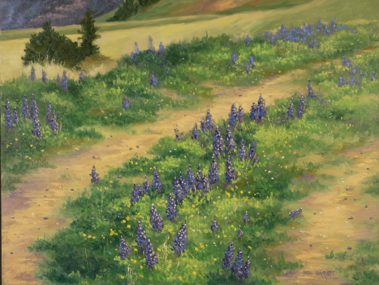 Lupine Valley